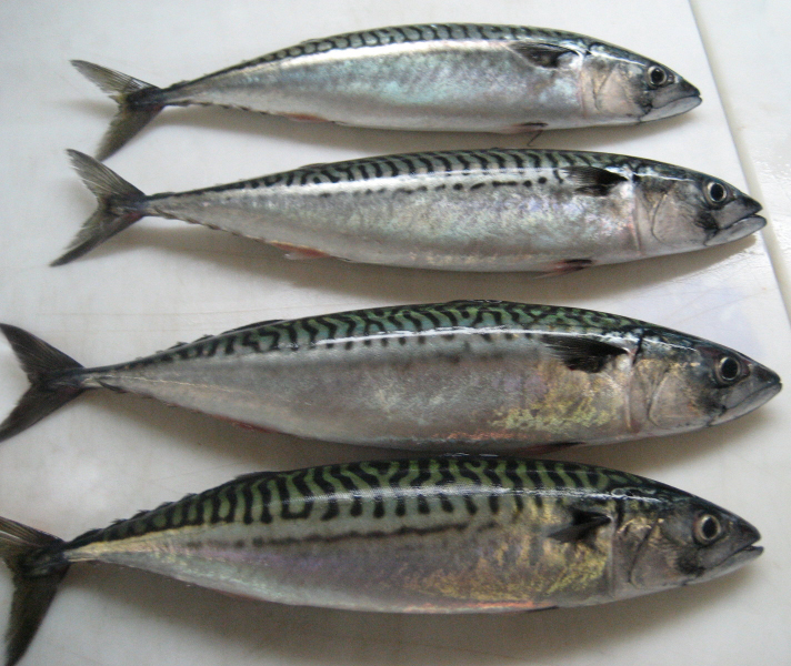 English names of Fish Not Fishes in Marathi  Blogger